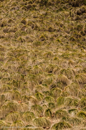 cascading grass on a slope