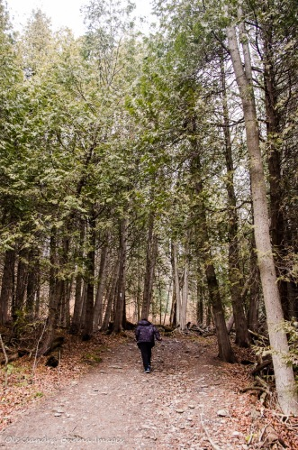 hiking at Forks of the Credit Provincial Park