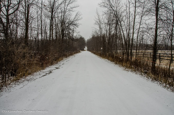 road to Mount Nemo Conservation Area
