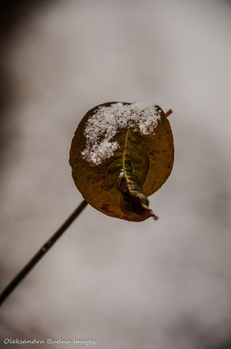 leaf covered in snow