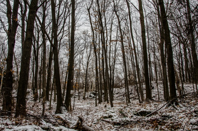 winter forest at Mount Nemo Conservation Area