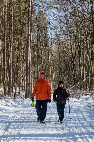 winter walk at Hilton Falls Conservation Area