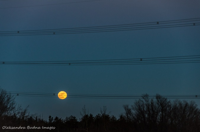 full wolf moon and electrical wires