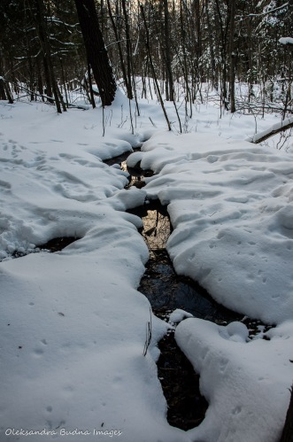 brook in the winter