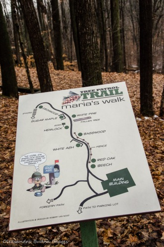 Tree Patrol Trail at Kortright Centre for Conservation