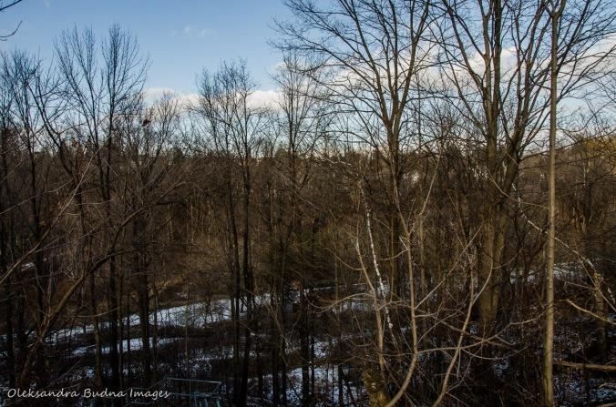 view of Massey Creek ravine in toronto