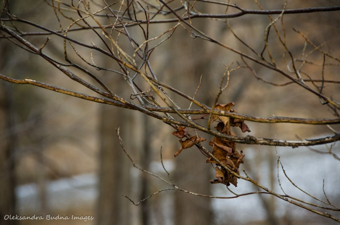 dry leaf on a bare branch