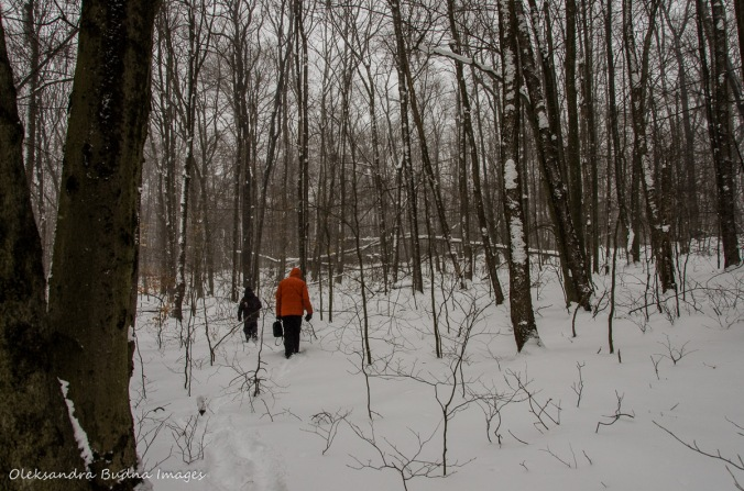 walking in the winter forest in Allegany State Park