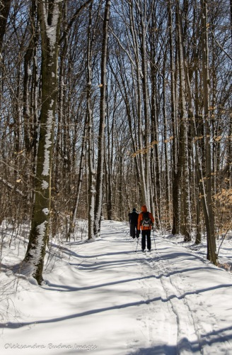 skiing in Allegany state park