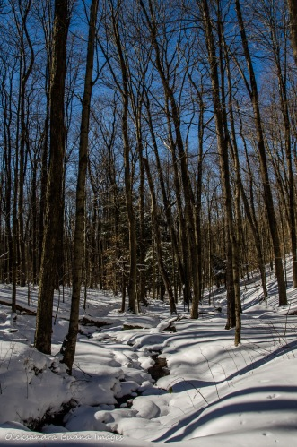 winter in Allegany State Park