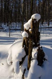 winter in Allegany State Park