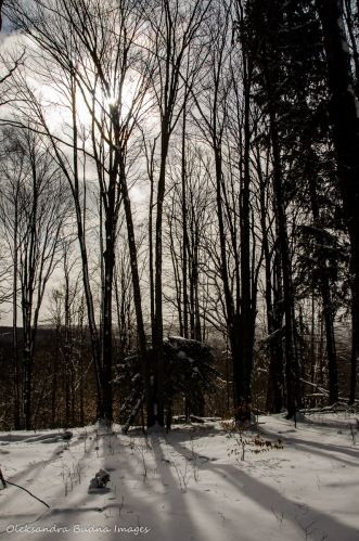 winter morning at Allegany State Park