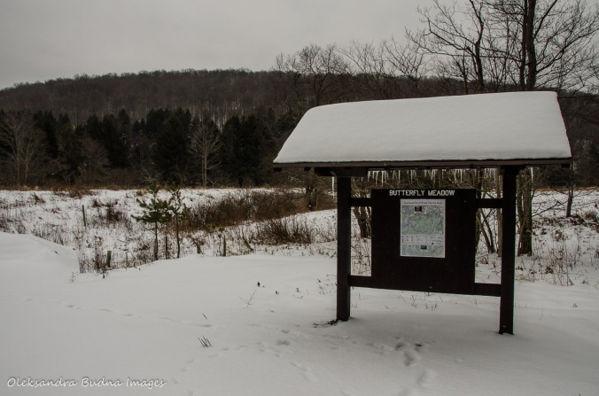 butterfly meadow in the winter in Allegany State Park