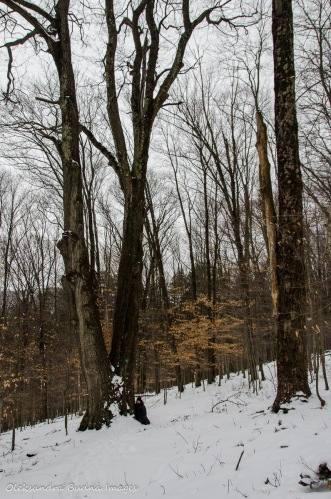 Osgood Trail in Allegany State Park