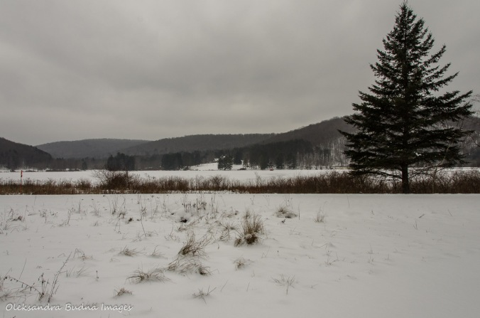 Red House Lake in Allegany State Park
