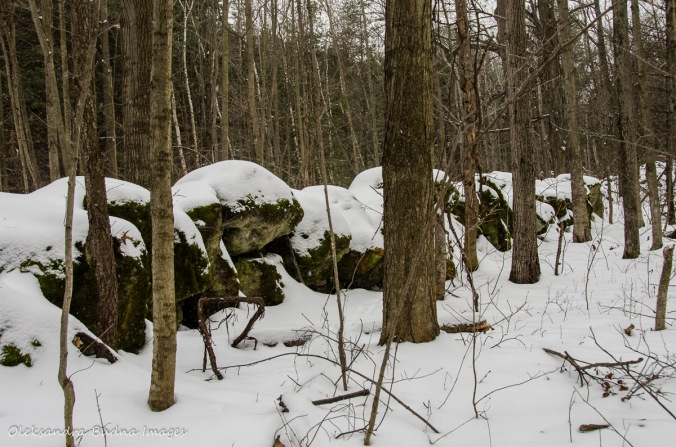 stone wall at Crawford Lake Conservation Area