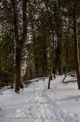 winter at Crawford Lake Conservation Area