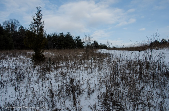 Crawford Lake Conservation Area in the winter