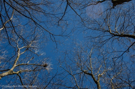 branches against the blue sky