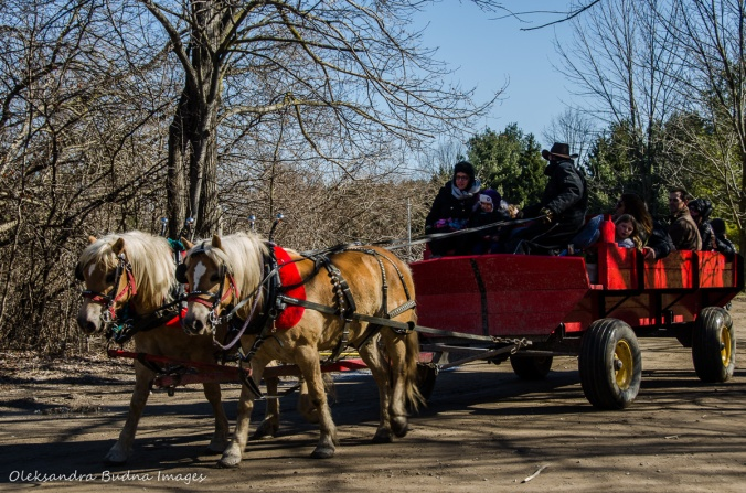 wagon rides at Kortright Centre for Conservation