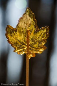 maple syrp lollypop in the form of a maple leaf