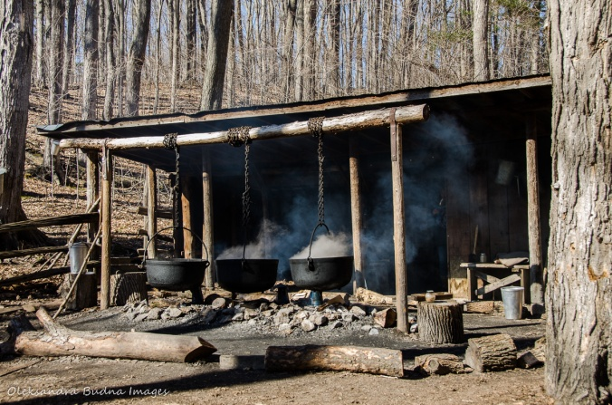 maple syrup festival at Kortright Centre for Conservation
