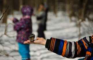 had feeding chickadees at Humber Arboretum