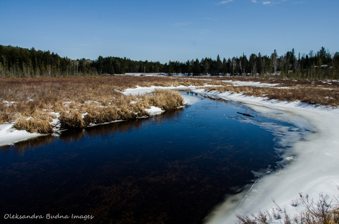 hiking Spruce Boardwalk in Algonquin in the winter