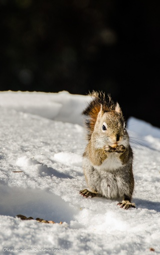 squirrel in Algonquin