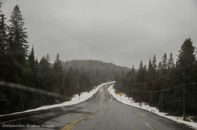 Highway 60 in Algonquin in the winter