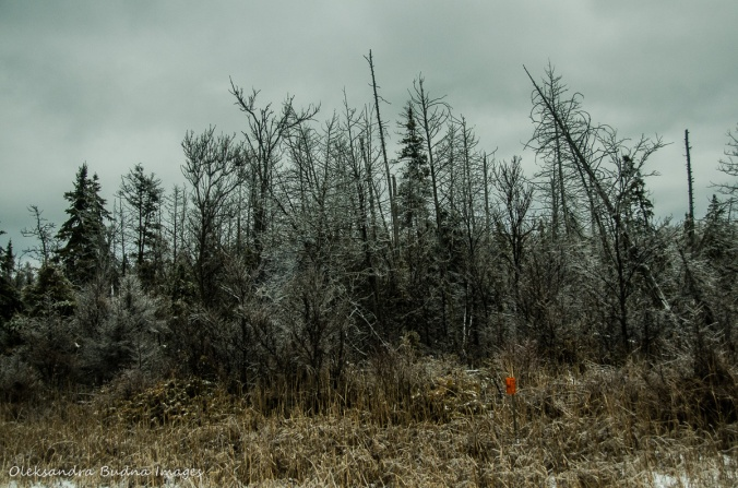 AlgonquinMarch2016-2