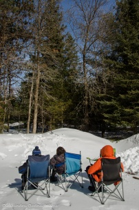 watching blue jays in Algonquin