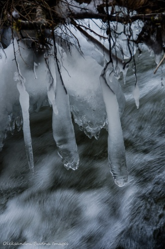 ice on tree branches near the river