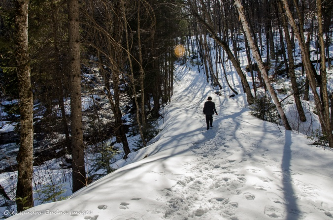 hiking the Track and Tower trail in algonquin in the winter