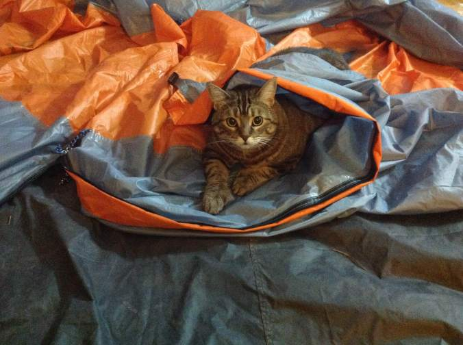 cat lying on a tent