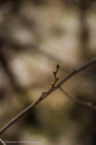 first buds