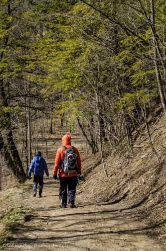 hiking the Spring Creek Trail at Dundas Valley Conservation Area