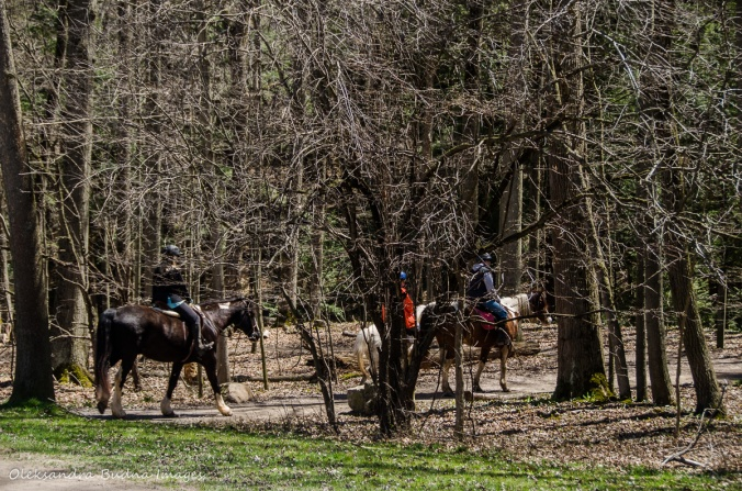 horseback riders at Dundas Valley Conservation Area