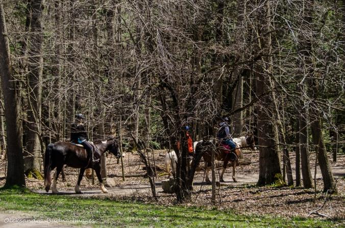 horseback riders at Dundas Valley Conservation Area