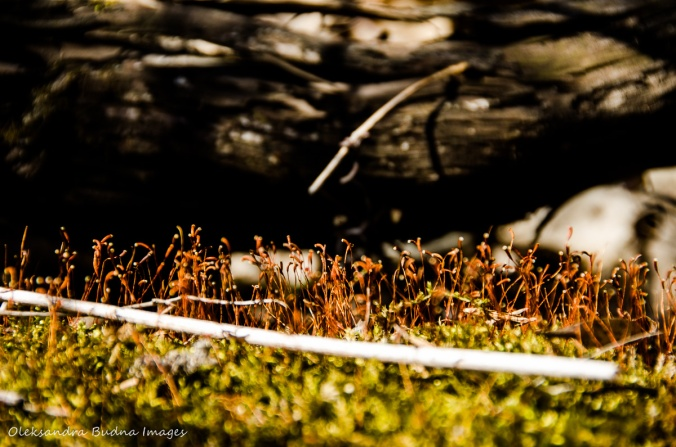 moss in the spring