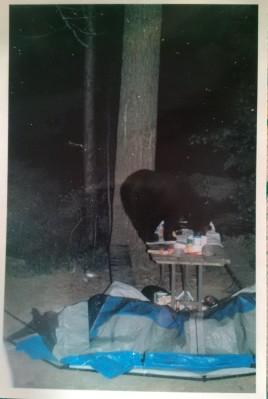 bear on a picnic table