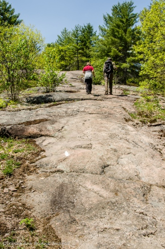 Ganaraska Trail at Queen Elizabeth II Wildlands