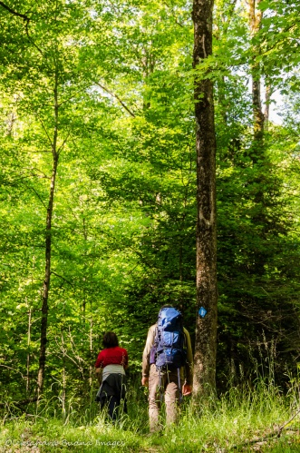 hiking the Lakeshore Trail at Silent Lake Provincial Park