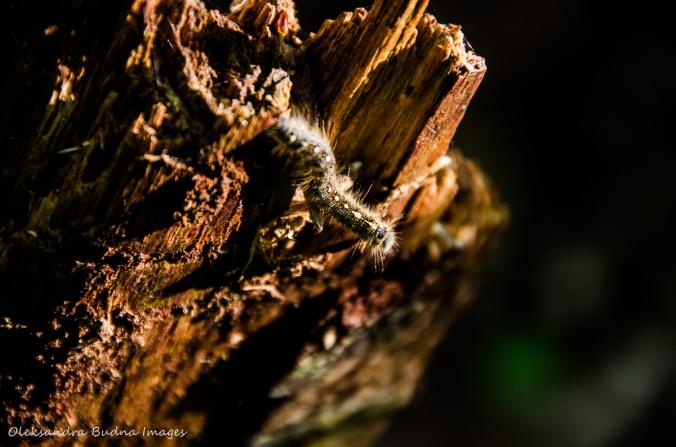 catrpillar on a tree stump
