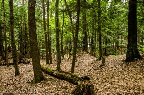 Silent Lake Provincial Park