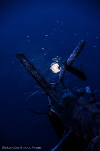 moon reflected in the water