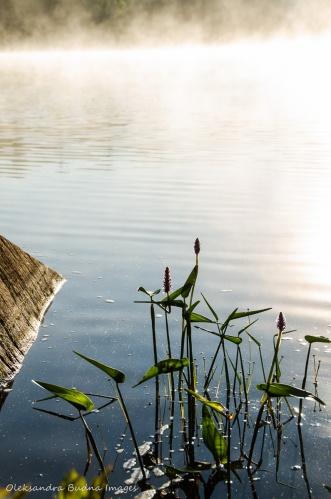 misty morning on Terry Lake in Killarney