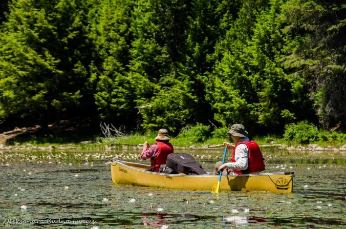paddling among water lilies on Bell Lake in Killarney