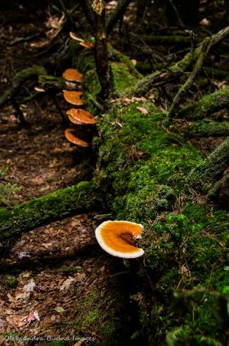 fungi on moss covered tree