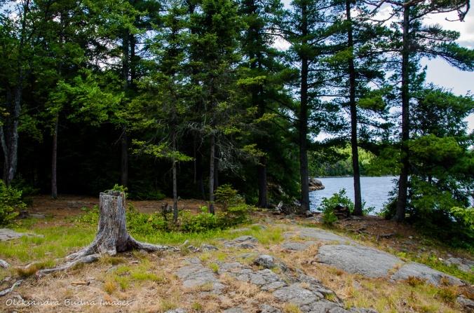 site 115 on Balsam Lake in Killarney